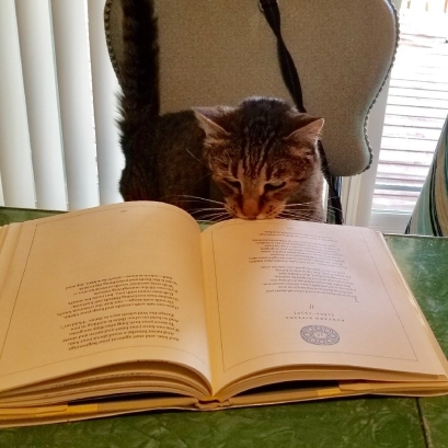 My cat loves a good book!