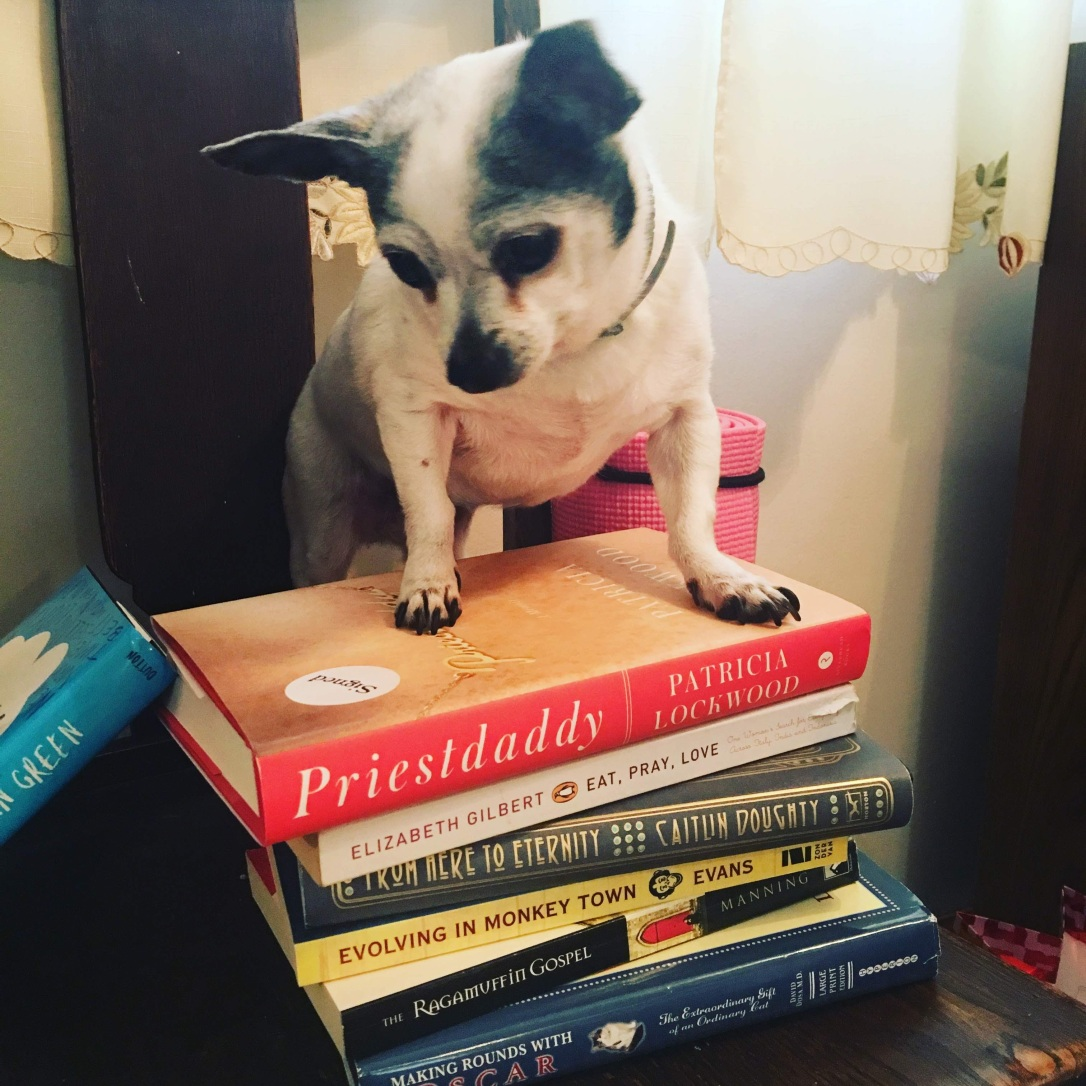 Tinkerbell the chihuahua sits on a pile of books