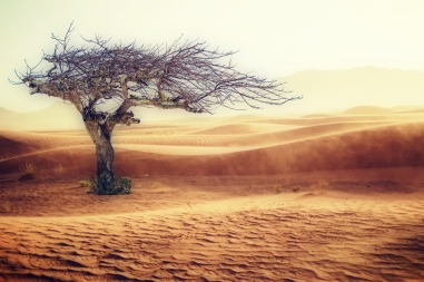 An image of a tree in a barren dessert