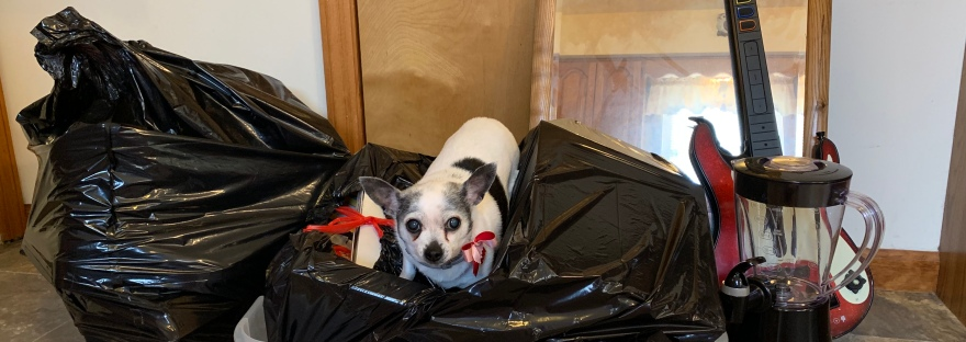 Two trash bags full of belongings and other assorted items are gathered into a pile. A small round chihuahua sits on top. of a black garbage bag.