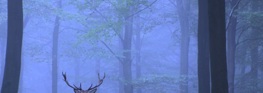 Paperback cover for Fallon's Hope shows a deer in a misty forest