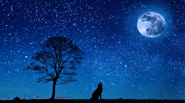 A dog in silhouette howls at the mood against the backdrop of a starry sky.