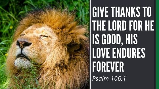 "An image shows a lion and the bible verse, ""Give thanks to the Lord for he is good, his love endures forever."""
