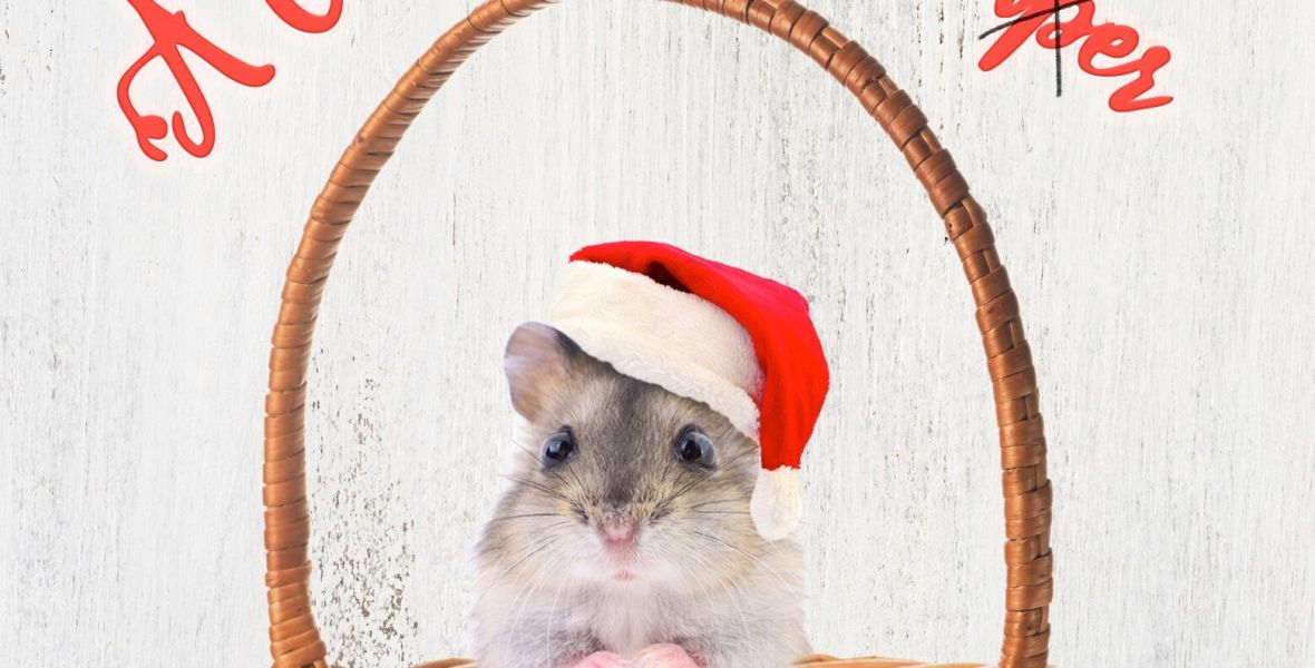 The cover of the book shows a sweet little hamster in a basket. He wears a Santa hat.