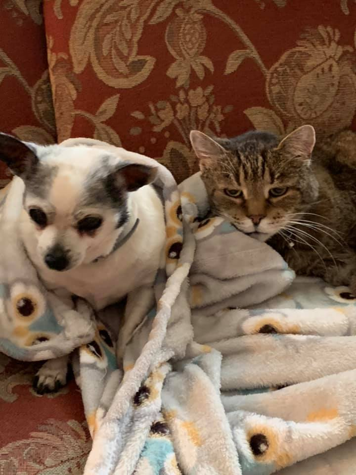 A small white dog and a large gray cat sit on a couch next to each other.